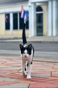 Cat(s) of Bangkok Thailand