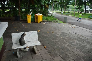 Cat(s) of Bangkok Thailand