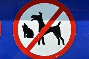 No Dogs/Cats Allowed