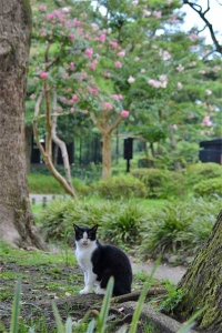 August Cat(s) Tokyo