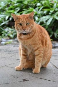 日比谷公園の猫チャッピーChappy The Cat