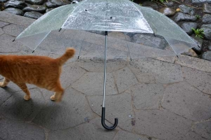 雨傘と猫 Chappy The Cat