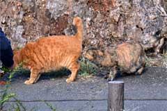 September Cats Tokyo