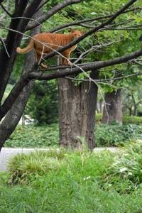 September Cat(s) Tokyo