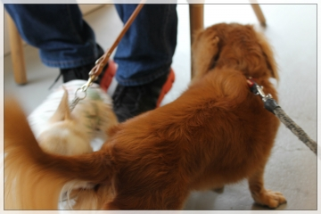 H28101004e-dogFactoryLounge.jpg