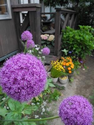 20160525店前の花