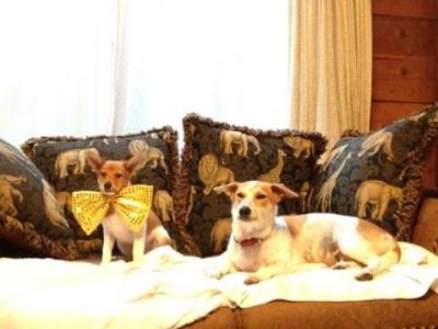 愛犬物語 沖縄犬夢