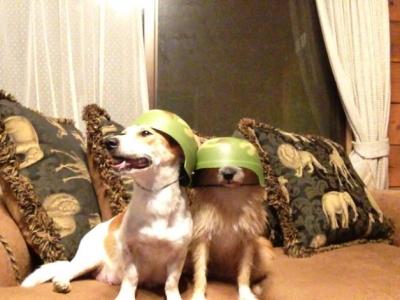 愛犬物語ブログ 沖縄犬夢