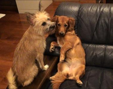 愛犬物語 愛犬サンシン、サンバ