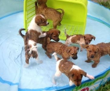 犬用プール
