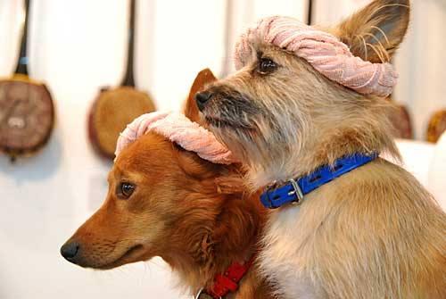 沖縄犬夢 オキナワンドリーム