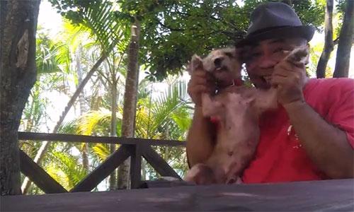 愛犬サンシンちゃん 愛犬物語の写真、動画