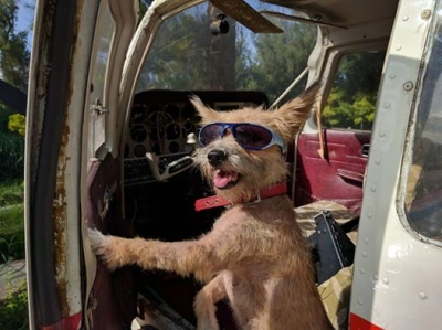犬のパイロット 愛犬サンシンちゃん