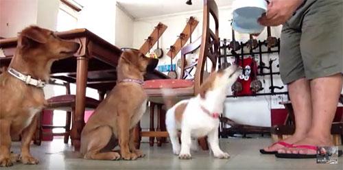 愛犬物語 愛犬サンバ