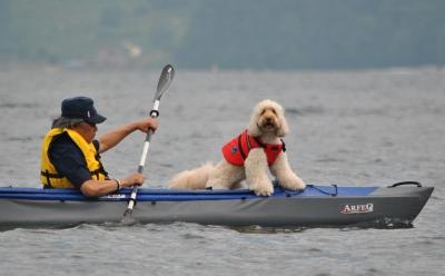 犬とカヤック