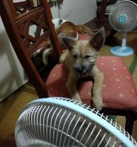 オキナワンドリーム(沖縄犬夢)
