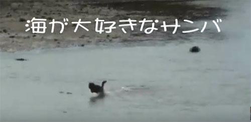 沖縄犬夢 愛犬サンバ