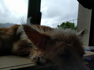 愛犬物語 沖縄犬夢 オキナワンドリーム