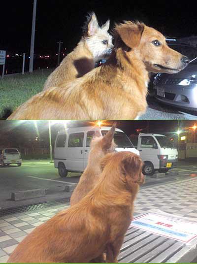 愛犬サンシン、サンバの写真