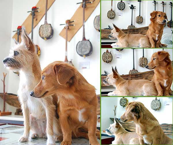 沖縄犬夢 サンシン、サンバ