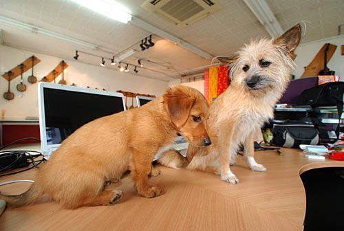 愛犬サンバとサンシン