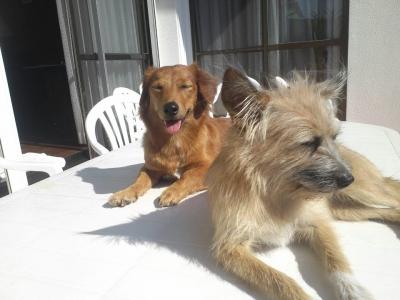 沖縄犬夢 愛犬サンシン、サンバ