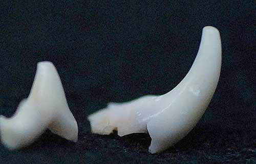 犬の乳歯 愛犬物語サンバ