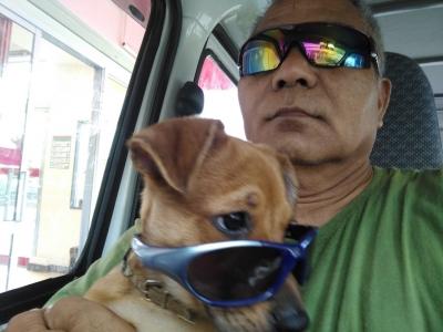 愛犬物語 サンバの写真