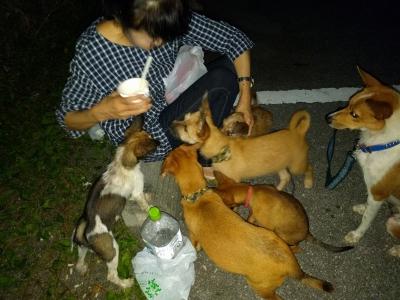 愛犬物語の写真、画像