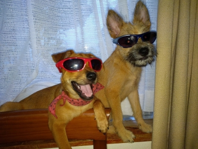 愛犬物語 叶夢とサンバの写真
