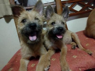 愛犬サンシンちゃんの写真 愛犬物語