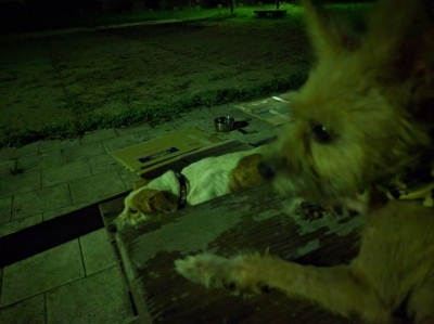愛犬サンゴ 愛犬物語