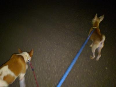 犬の散歩 愛犬物語