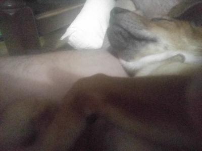 犬の安眠枕