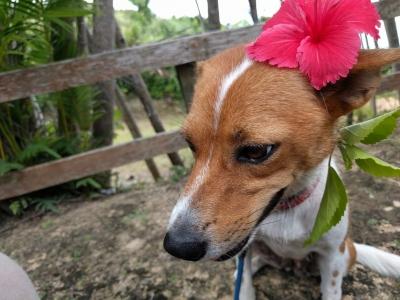 愛犬物語 光ちゃん 沖縄犬夢