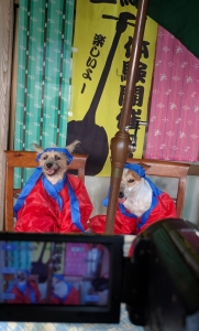 犬のYouTubeスタジオ