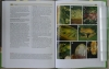 Introduction_to_Mycology_in_the_Tropics7.jpg