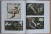 fungi-europaei-hebeloma21.jpg
