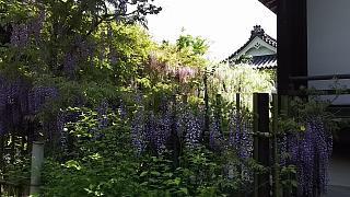 20160430天龍寺(その62)