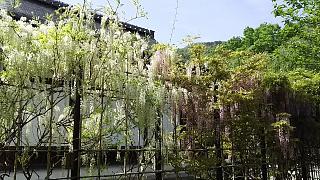 20160430天龍寺(その65)