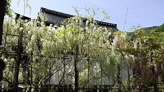 20160430天龍寺(その66)