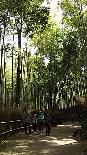 20160430竹林(その5)