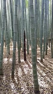 20160430竹林(その8)