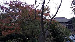 20151120清水寺(その43)