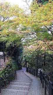 20151120清水寺(その51)