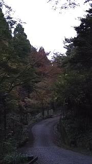 20151120清水寺(その53)