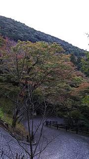 20151120清水寺(その54)