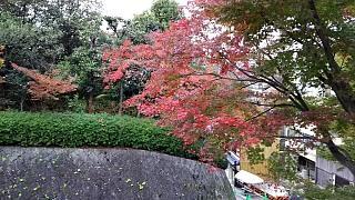 20151120清水寺(その59)