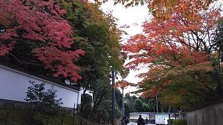 20151120東福寺(その1)