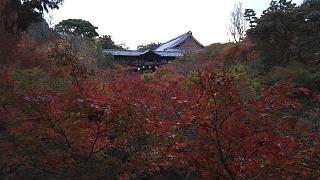 20151120東福寺(その4)